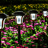 Bright garden lights with a very pretty pattern