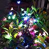 Solar Fairy in Garden